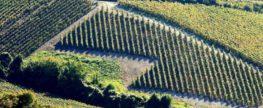 Le champagne une fierté pour la France et ses touristes
